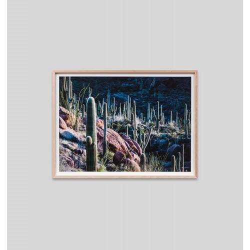 Cacti At Dusk Framed Print